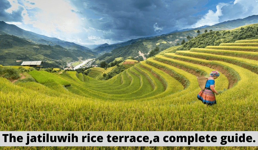 The jatiluwih rice terrace, a Complete guide